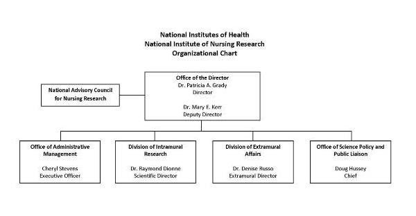 Organization chart for NINR. The chart shows 6 boxes, the Director box at the top with 4 beneath, one to the left. The box parrallel, and to the left is the National Advisory Council for Nursing Research. The Director of NINR is Dr. Patricia A. Grady, the Deputy Director is Dr. Mary E. Kerr. The Office of the Director has four reporting groups: Office of Administrative Management, the Division of Intramural Research, the Division of Extramural Affairs, and the Office of the Associate Director for Scientific Programs. Cheryl Stevens is the Executive Officer for Office of Administrative Management, Dr. Raymond Dionne is the Scientific Director for Division of Intramural Research, Dr. Denise Russo is the Extramural Director, and Dr. Mary E. Kerr is the Associate Director for Office of the Associate Director for Scientific Programs.